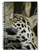 The Jaguar's Gaze Spiral Notebook