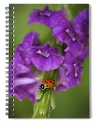 The Lady Spiral Notebook