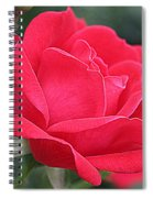 The Last Rose Of Spring Spiral Notebook