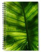 The Leaf Spiral Notebook
