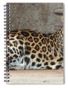 The Leopard Spiral Notebook