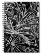 The Light Catchers Spiral Notebook