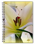The Lily Spiral Notebook