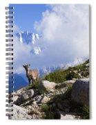 The Little Ibex Spiral Notebook