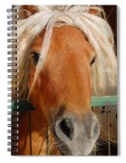 The Little Pony Spiral Notebook