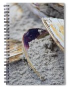 Shells In The Sand Spiral Notebook