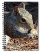 The Magic Acorn Spiral Notebook