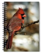 The Male Northern Cardinal Spiral Notebook