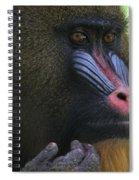 The Mandrill Spiral Notebook