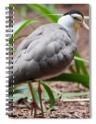 The Masked Lapwing Vanellus Miles Previously Known As The Mask Spiral Notebook