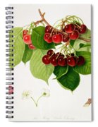 The May Duke Cherry Spiral Notebook