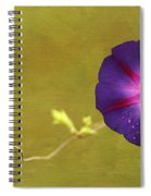 The Morning Glory Spiral Notebook