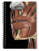 The Muscles Of The Mouth Spiral Notebook