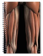 The Muscles Of The Upper Legs Rear Spiral Notebook