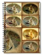 The Neighbor's Dog Spiral Notebook