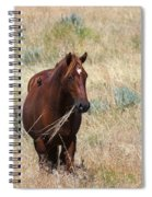 The Odd Couple Spiral Notebook
