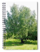 The Old Birch Tree Spiral Notebook