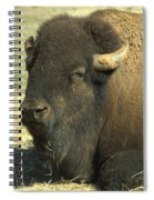 The Old Man Spiral Notebook