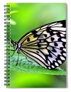 The Paper Kite Or Rice Paper Or Large Tree Nymph Butterfly Also Known As Idea Leuconoe 2 Spiral Notebook