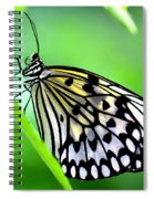 The Paper Kite Or Rice Paper Or Large Tree Nymph Butterfly Also Known As Idea Leuconoe Spiral Notebook