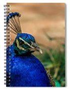 The Peacock Spiral Notebook