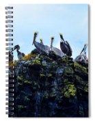 The Pelican Dance Spiral Notebook