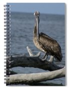 The Pelican Pose Spiral Notebook