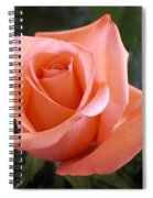 The Perfect Coral Rose Spiral Notebook