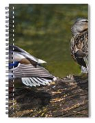 The Perfect Mallard Couple Spiral Notebook
