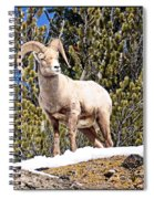 The Perfect Pose Spiral Notebook