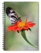 The Piano Key Butterfly Spiral Notebook