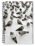 The Pigeon Spiral Notebook