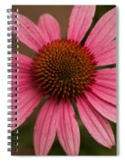 The Pink Daisy Spiral Notebook