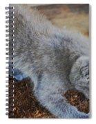 The Playful Kitten Spiral Notebook
