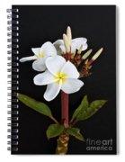 The Plumeria Spiral Notebook
