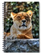 The Pondering Lioness Spiral Notebook