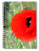 The Poppy And The Bee Spiral Notebook