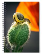 The Poppy And The Snail Spiral Notebook