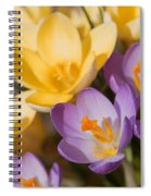 The Purple And Yellow Crocus Flowers Spiral Notebook