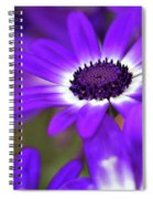 The Purple Daisy Spiral Notebook