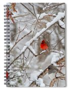 The Quiet Within The Forest Spiral Notebook