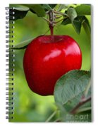 The Red Apple Spiral Notebook