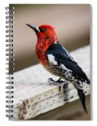 The Red Head Spiral Notebook
