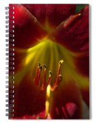 The Red Lily Spiral Notebook