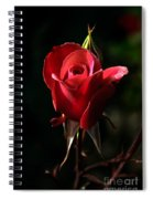 The Red Rode Bud Spiral Notebook