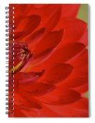 The Red Sun Dahlia Spiral Notebook