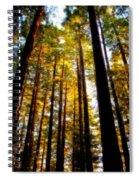 The Redwoods Of Florence Keller Park Spiral Notebook