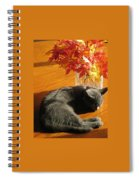 The Restful Leaves If Fall Spiral Notebook
