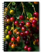 The Ripening Spiral Notebook