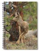 The Rudolph Dance Spiral Notebook